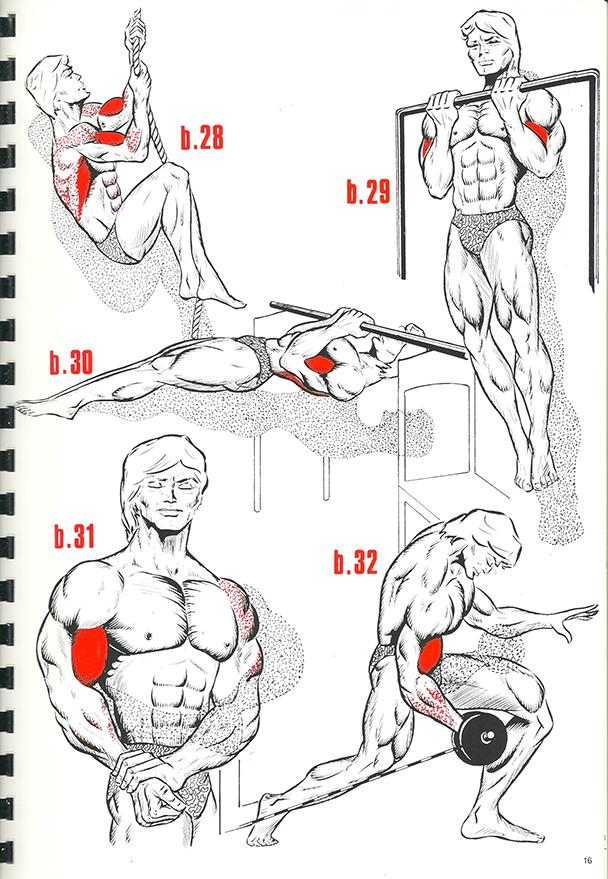 exercices de musculation 11_BLOGUS