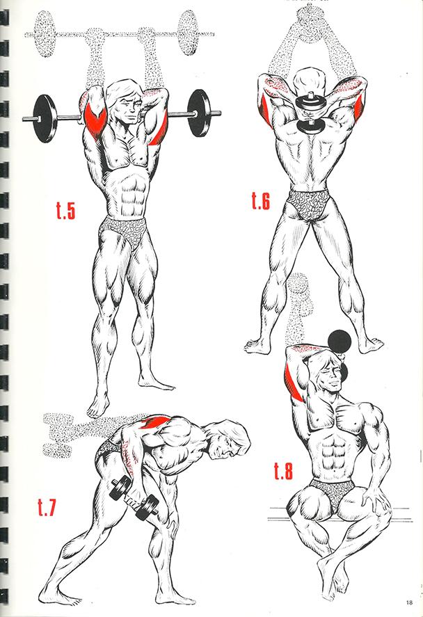 exercices de musculation 12_BLOGUS