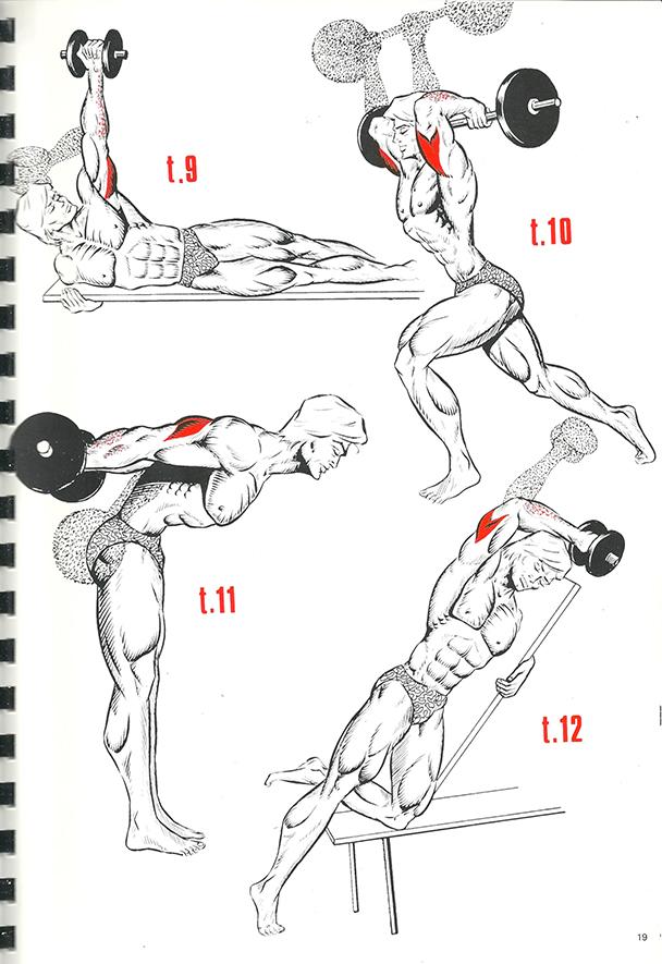 exercices de musculation 13_BLOGUS