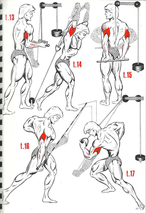 exercices de musculation 14_BLOGUS
