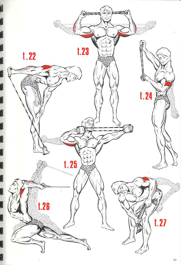 exercices de musculation 15_BLOGUS