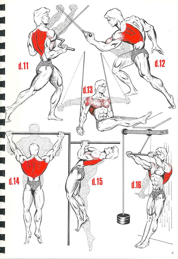 exercices de musculation 7_BLOGUS
